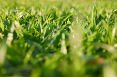 Backgound of blurred grass Stock Images