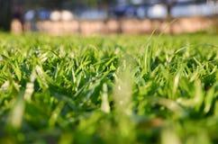 Backgound d'herbe brouillée Photos stock