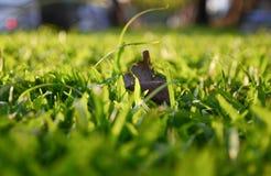 Backgound d'herbe brouillée Image libre de droits