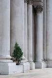 Backgound da árvore Imagens de Stock Royalty Free