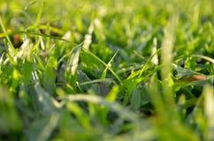 Backgound da grama borrada Fotos de Stock