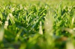 Backgound da grama borrada Imagens de Stock