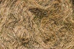 Backgound da grama seca Fotos de Stock