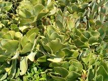 Backgound de cactus Photo stock