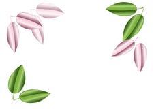 Backgound de congé de rose et de vert Illustration de vecteur Images stock