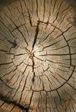 Backgound dell'albero Fotografie Stock