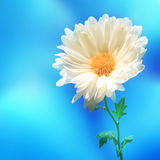 Backgound della sfuocatura della natura del fiore fotografie stock