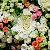 Backgound di orizzontale delle rose Immagini Stock Libere da Diritti