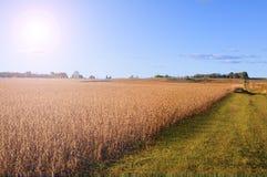 Backgound do campo de exploração agrícola Foto de Stock