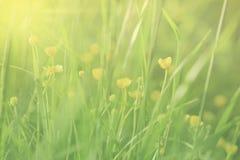 Backgound floral borrado Fotografia de Stock Royalty Free