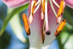 Backgound floral lumineux abstrait Images stock