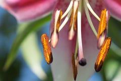 Backgound floreale luminoso astratto Immagini Stock
