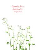 Backgound frais d'herbes Image libre de droits