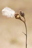 Backgound sec d'instruction-macro de fleur Photographie stock libre de droits