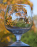 Backgound wineglass. Unfocused view forest views through the glass royalty free stock image