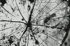 Backgr de madera Foto de archivo