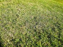 Backgr en bois de lumière du soleil de vert de nature de texture de fond d'herbe verte images stock