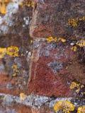 Backgr Textured amarelo, do cinza e do terracotta do grunge Fotografia de Stock Royalty Free