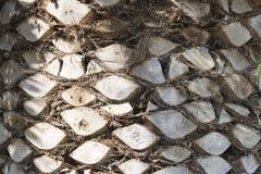 backgraund drzewka palmowego bagażnik zdjęcie stock