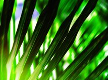 Backgro en feuille de palmier vert vibrant vif horizontal d'abrégé sur nature image libre de droits