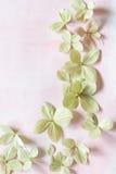 Backgrodund floral artístico sutil com flores do hortensia Fotografia de Stock Royalty Free
