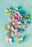 Backgrodund floral artistique subtil avec des fleurs de hortensia image stock