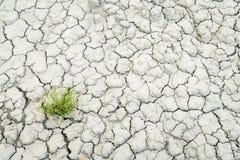 Backgroiund sec et criqué de sol de désert Images libres de droits