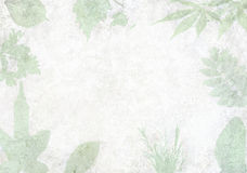 Backgrond ściana plamiąca z liśćmi Zdjęcia Royalty Free