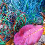 Backgrond del color de la rejilla de la pesca Fotografía de archivo