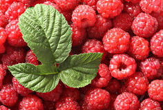 Backgrond of raspberry Stock Photography