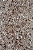 Backgronds dei Seashells fotografia stock libera da diritti