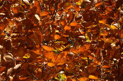 Backgroond листьев осени Стоковые Изображения