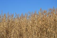 Backgroond av växten av en blå himmel Royaltyfri Bild