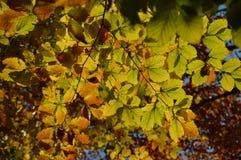 Backgroond de las hojas de otoño Imagen de archivo libre de regalías