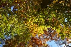 Backgroond des Herbstlaubs Stockbild
