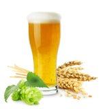 杯啤酒用在白色backgrou和蛇麻草隔绝的麦子 免版税库存图片