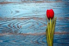 Backgrou mínimo floral da tulipa vermelha de easter do dia da mulher da mãe da mola Imagens de Stock