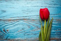 Backgrou mínimo floral da tulipa vermelha de easter do dia da mulher da mãe da mola Imagem de Stock Royalty Free