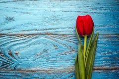Backgrou mínimo floral da tulipa vermelha de easter do dia da mulher da mãe da mola Fotos de Stock Royalty Free