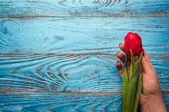 Backgrou mínimo floral da tulipa vermelha de easter do dia da mulher da mãe da mola Foto de Stock