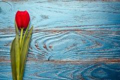 Backgrou minimo floreale del tulipano rosso di pasqua di giorno della donna della madre della primavera immagini stock