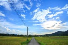 Backgrou nuvoloso del paesaggio della nuvola del cielo blu dell'erba di giallo del giacimento del riso Fotografie Stock Libere da Diritti