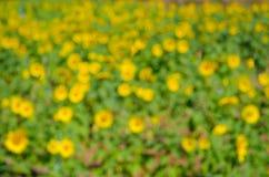 Backgrou verde intenso e giallo della flora della luce dell'estratto del bokeh della sfuocatura Immagini Stock Libere da Diritti