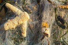Backgroud камня коралла моря ручки коралла на Пхукете Таиланде Стоковое Фото