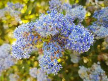 Backgroud bleu de nature photographie stock libre de droits