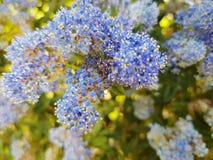 Backgroud bleu de nature image libre de droits