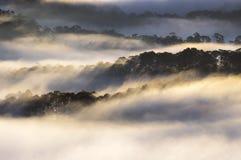 Backgroud con el bosque y la magia de la luz, parte 7 del pino de la cubierta de la niebla de los rayos solares fotos de archivo
