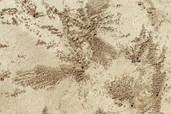 Backgroud da areia com tocas dos caranguejos Fotografia de Stock Royalty Free