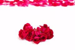 Backgroud das rosas vermelhas com pétalas Imagem de Stock