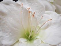 Backgroud de fleur photos stock